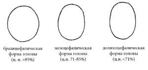 Цефалический индекс